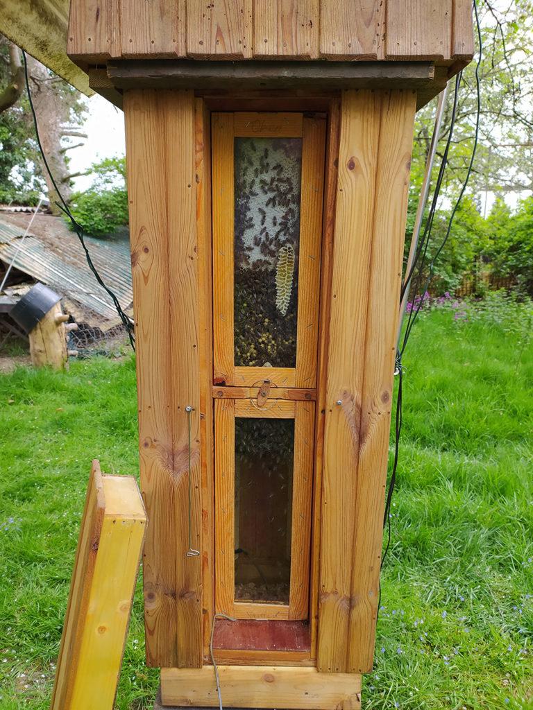Ramelli 3 Habitat mit offenem Fenster - die Bienenhaben schön gebaut