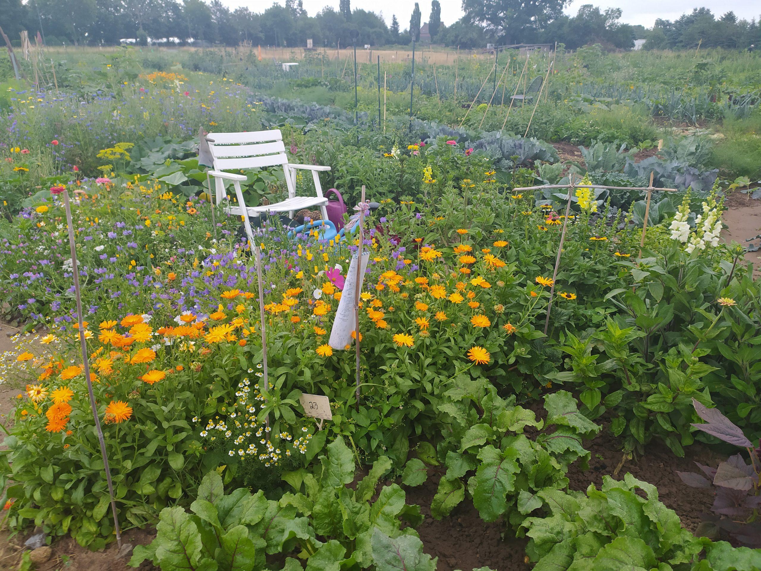 Blick auf den Gemüseanbau der Selbst-Ernte Hof am Deich